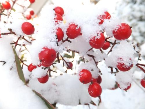 20160125雪2