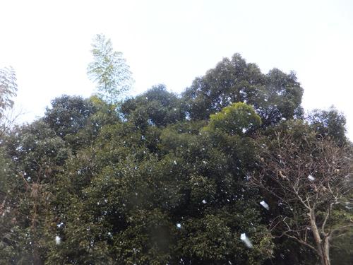 20160229天気2