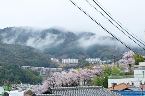 20160404桜