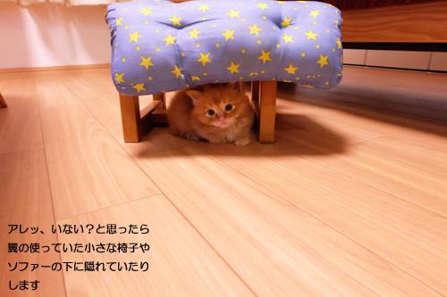 20160408かくれんぼ