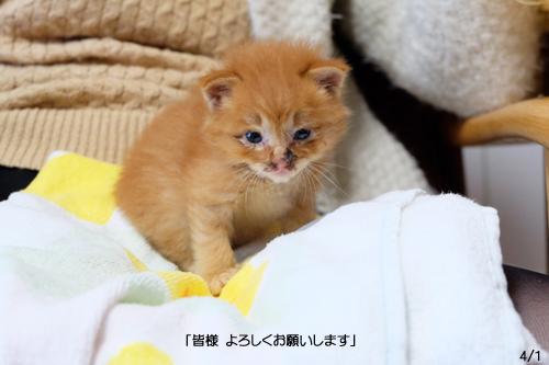 20160401子猫4a