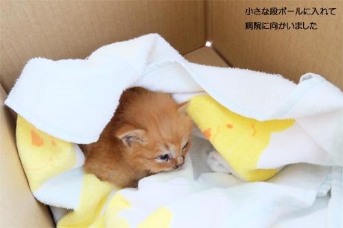 20160331子猫2