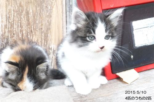 20150510子猫