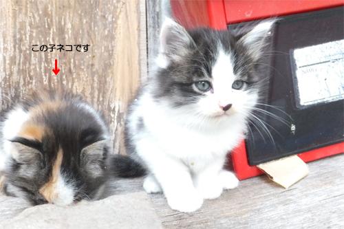 20150510三毛猫a
