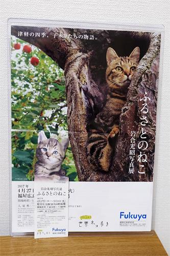 20170505ねこ写真展