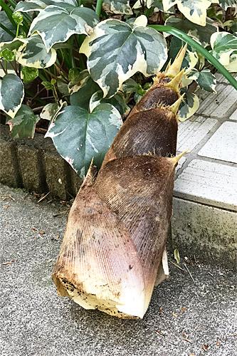 20180407竹の子