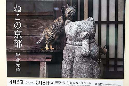 20180504ねこの京都1