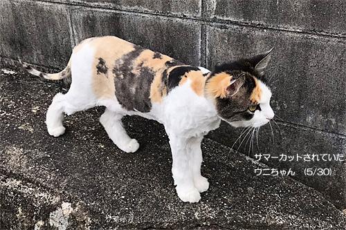 20180623ウニちゃん