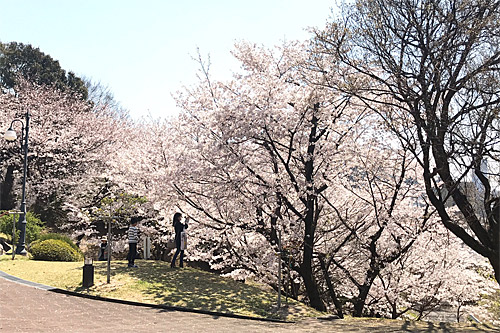 20190404お花見4