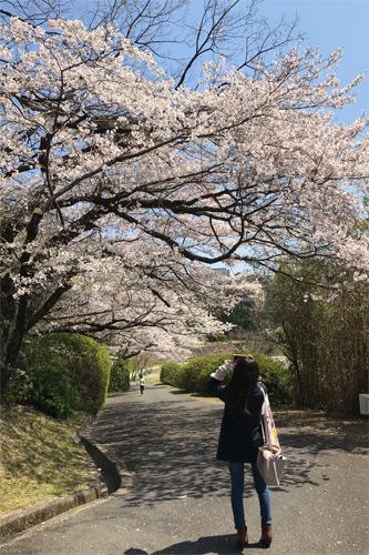20190404お花見5