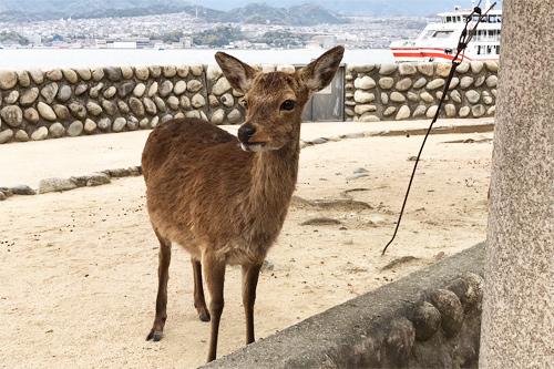 20190413鹿